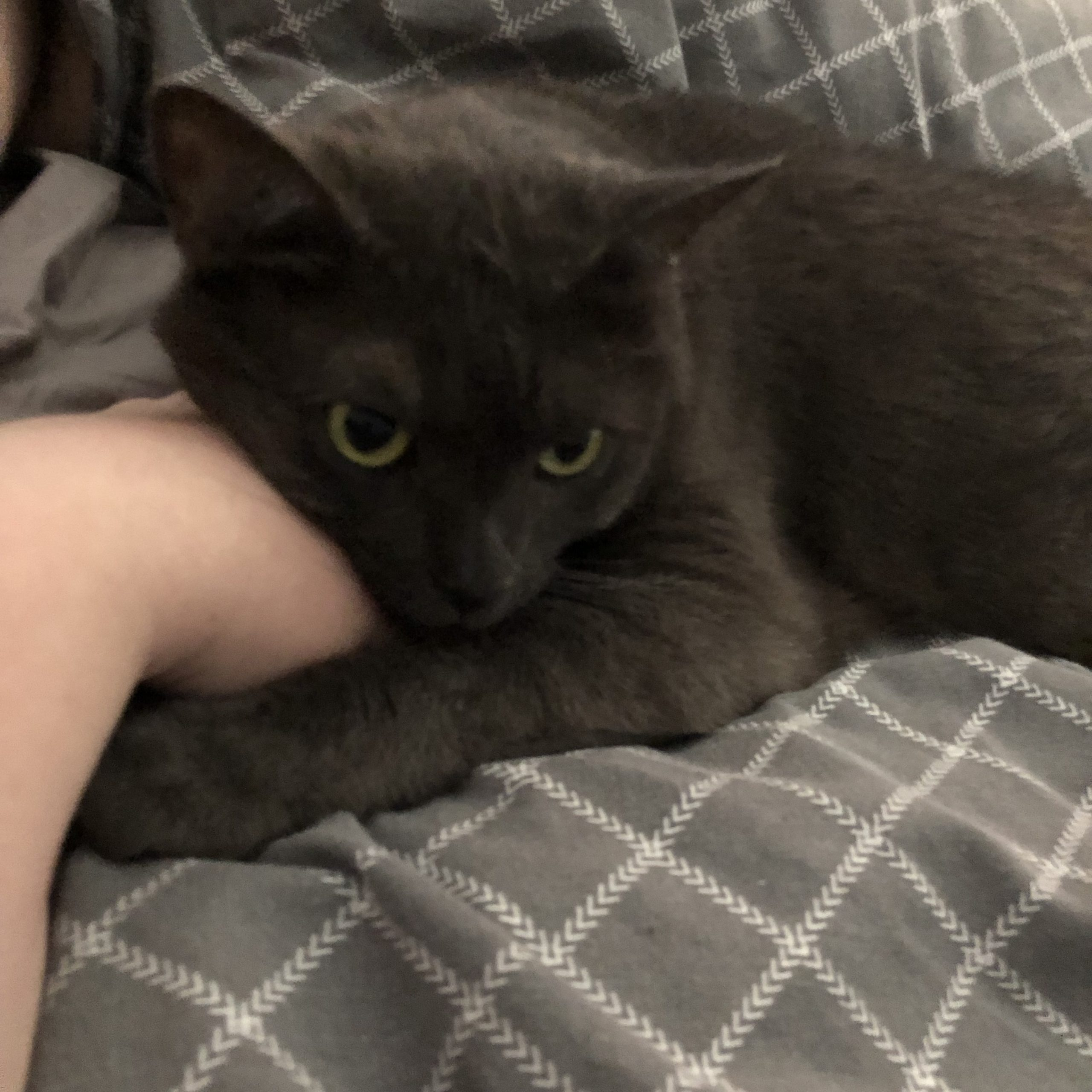 A photo of cat hugging my hand